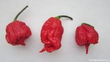 Carolina Reaper Pods